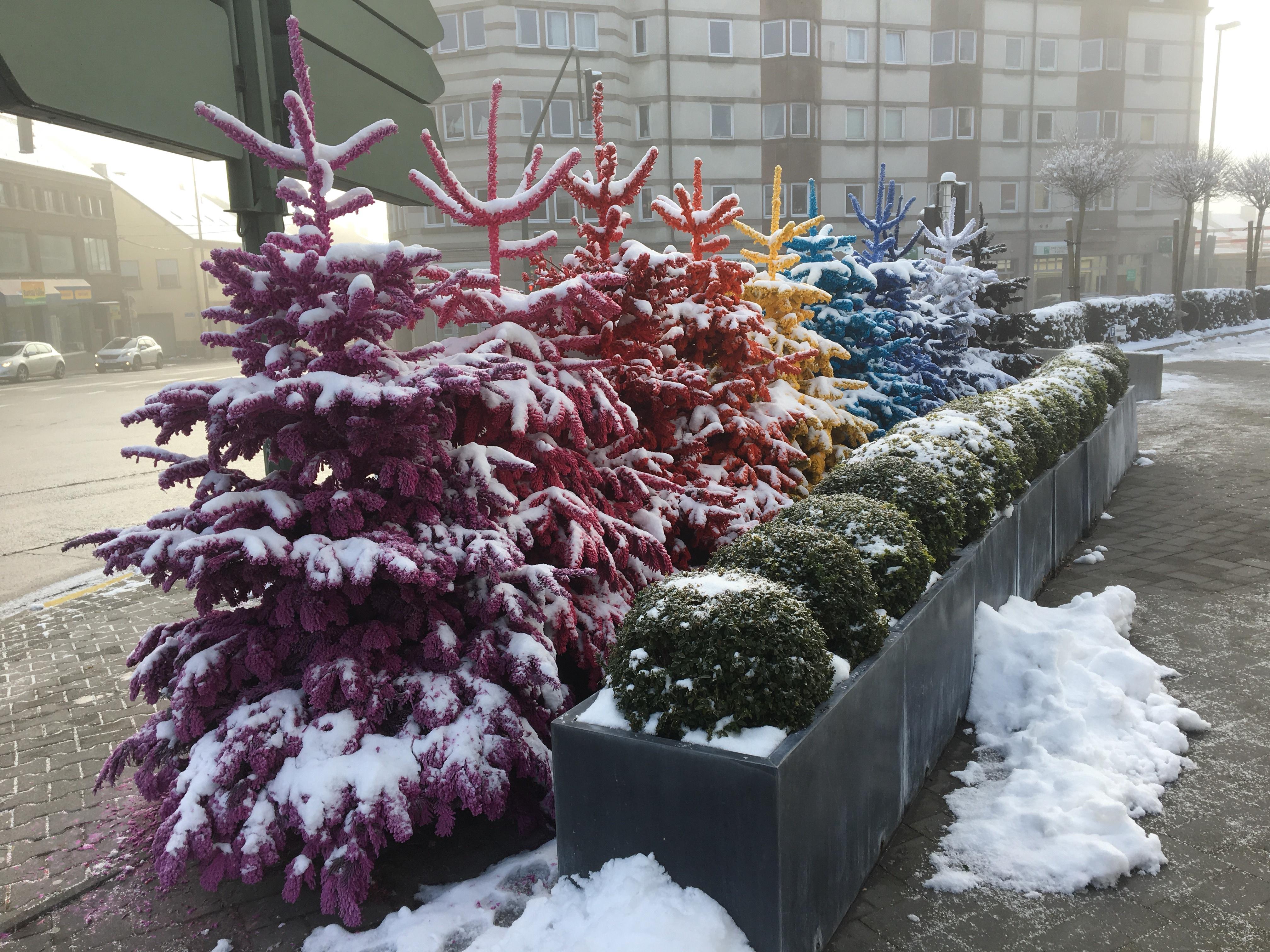 The famous Christmas Tree Rainbow of Bastogne.