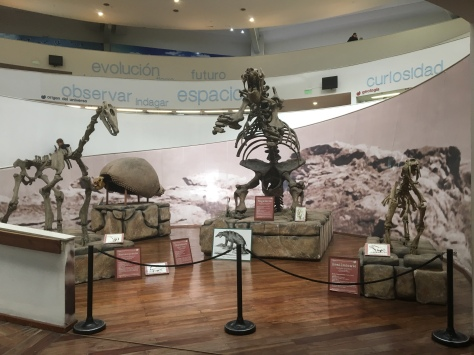Three skeletons of South American megafauna.