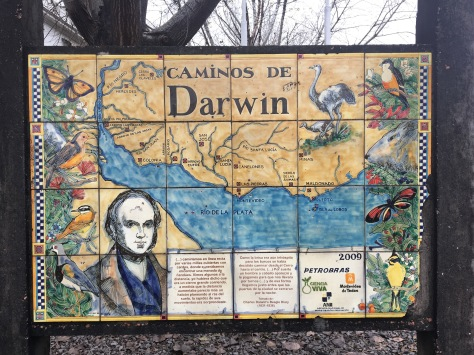 A map of Darwin's voyages around the Rio de la Plata.